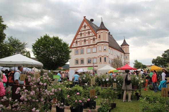 Rosenmarkt am Schloss Ummendorf - oberschwaben-welt