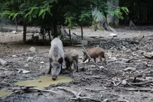 Wildschweingehege Tannenbühl  (3)