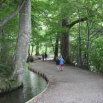 Entlang dem Krummbach nahe Kloster Ochsenhausen