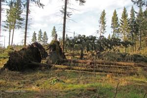 Sturm-Niklas-April-15-01