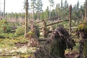 Sturm-Niklas-April-15-02