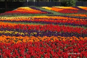 Blütenzauber in Sigmaringen - Oberschwaben-Welt