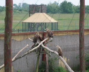 Adler-Hortobagy-Vogelkrankenhaus