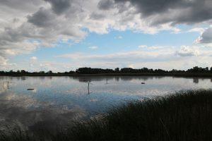 Theiss-Vogelreservat-03