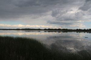 Theiss-Vogelreservat-04