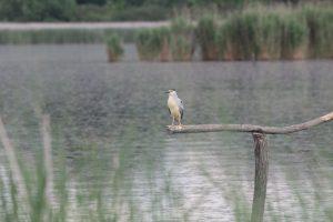 Theiss-Vogelreservat-08