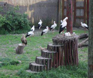 Voliere-2-Hortobagy-Vogelkrankenhaus